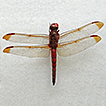 New data on dragonflies (Odonata) of ...
