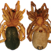 Three new species of the genus Toxoniella ...